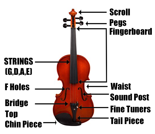 Anatomy of a Violin