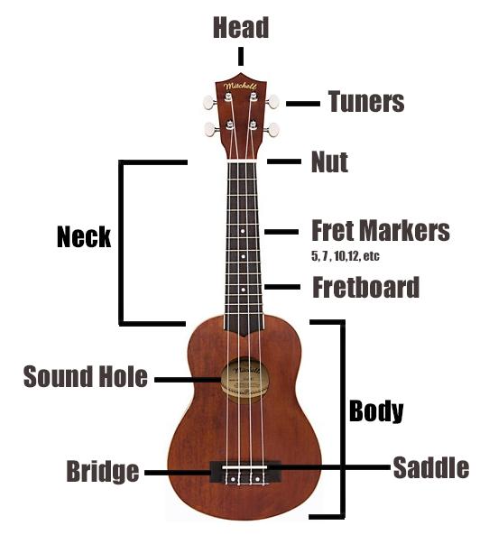 Anatomy of a Ukulele