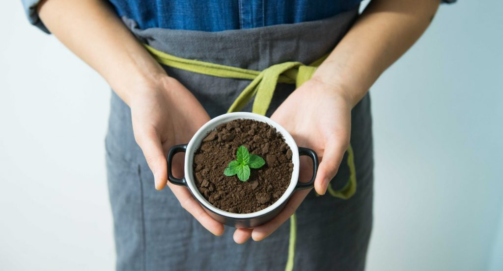 A plant grown on a cup. This article shares ways to recycle coffee grounds