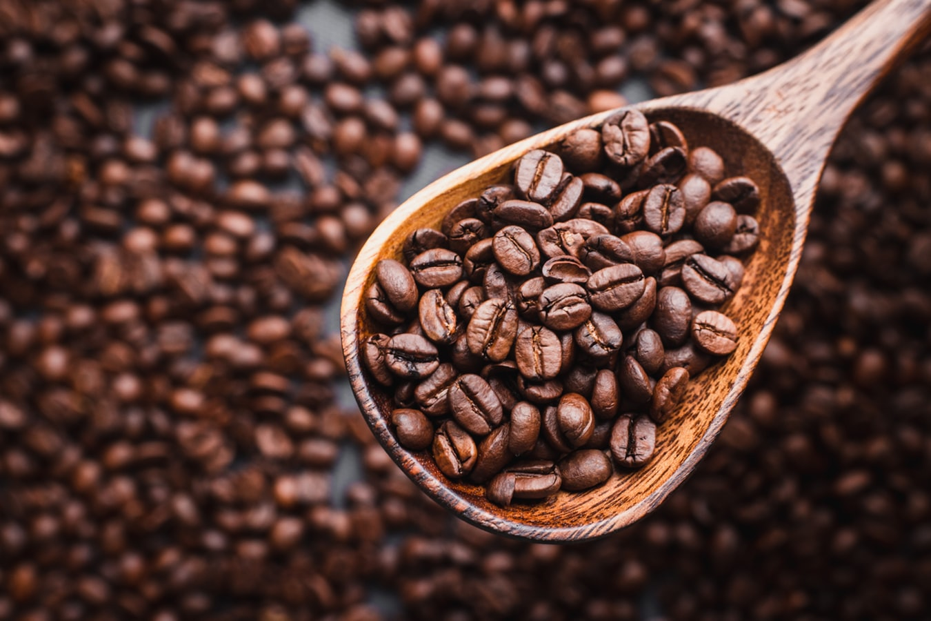 Arabica vs Robusta Coffee- What's the Difference?
